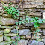 Met de viburnum tinus haal je een opvallende plant in huis!