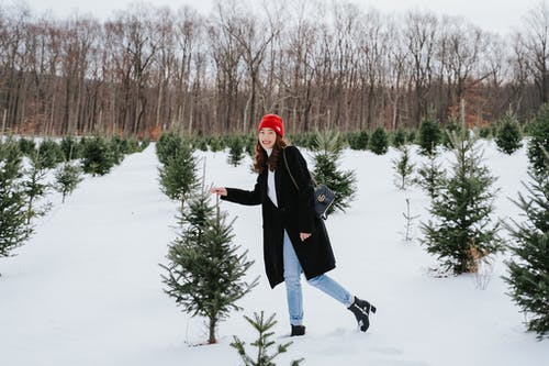 Budget kerstbomen